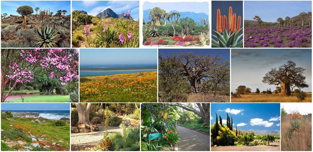 Africa Plant Life