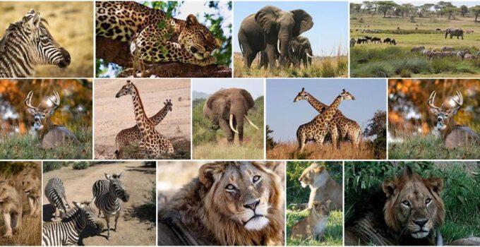 Africa Wildlife 3