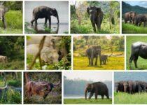 Asia Wildlife