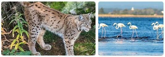Portugal Wildlife
