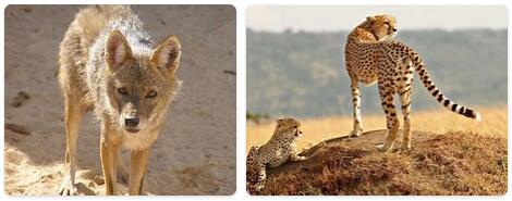 Algeria Wildlife