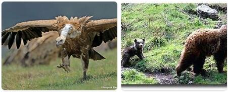Andorra Wildlife