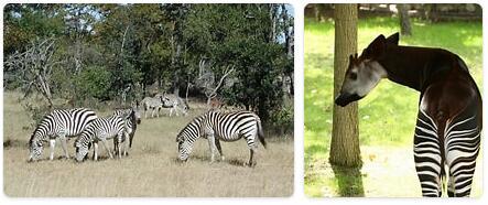 Angola Wildlife