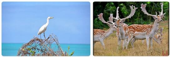 Antigua and Barbuda Wildlife
