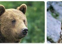 Austria Wildlife