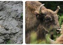 Azerbaijan Wildlife