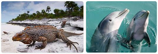 Bahamas Wildlife