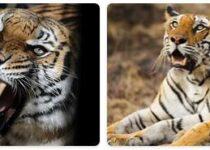 Bangladesh Wildlife