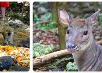 Barbados Wildlife