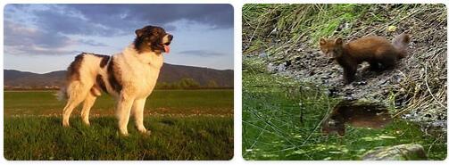 Bosnia and Herzegovina Wildlife