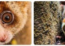 Brunei Wildlife