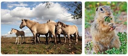Bulgaria Wildlife