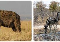 Burundi Wildlife