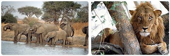 Cameroon Wildlife