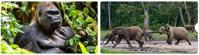 Central African Republic Wildlife