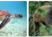 Comoros Wildlife