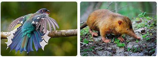 Cuba Wildlife