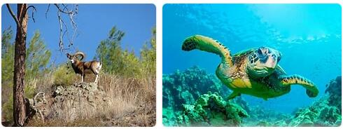 Cyprus Wildlife