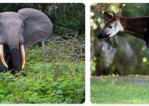 Democratic Republic of The Congo Wildlife
