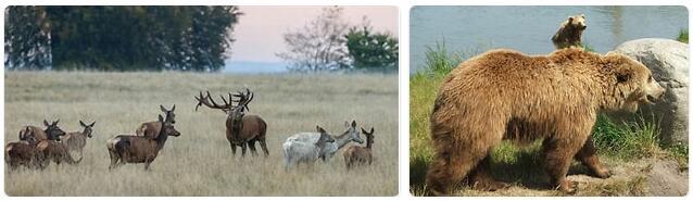 Denmark Wildlife