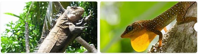 Dominica Wildlife