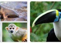 Ecuador Wildlife