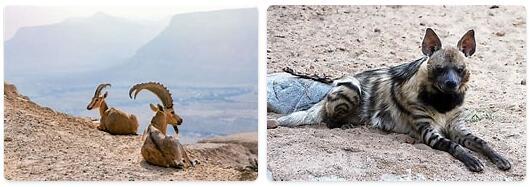 Egypt Wildlife