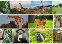 Equatorial Guinea Wildlife
