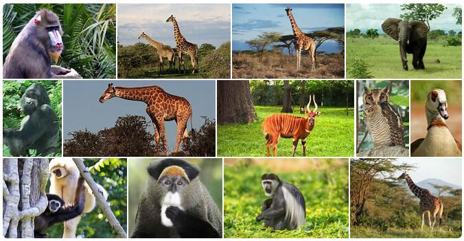 Equatorial Guinea Wildlife