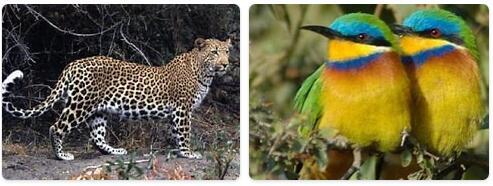 Eritrea Wildlife
