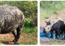 Eswatini Wildlife