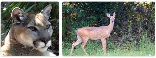 Georgia Wildlife