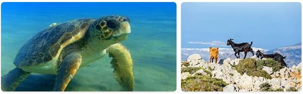Greece Wildlife