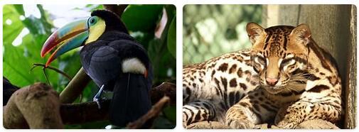 Guatemala Wildlife