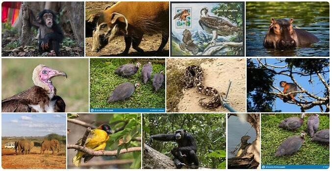 Guinea Bissau Wildlife