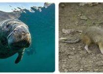 Haiti Wildlife