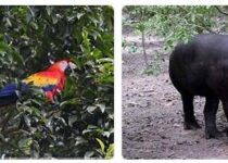 Honduras Wildlife