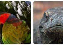 Indonesia Wildlife
