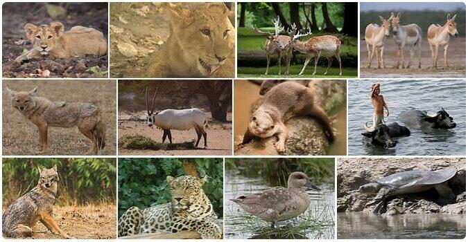 Iraq Wildlife