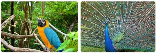 Jamaica Wildlife