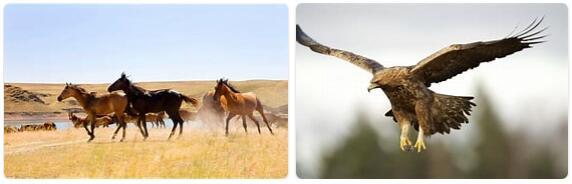 Kazakhstan Wildlife