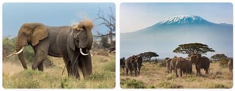 Kenya Wildlife