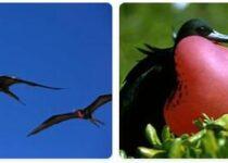 Kiribati Wildlife