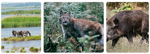 Latvia Wildlife