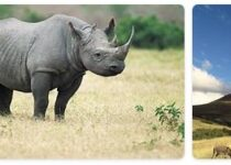 Lesotho Wildlife