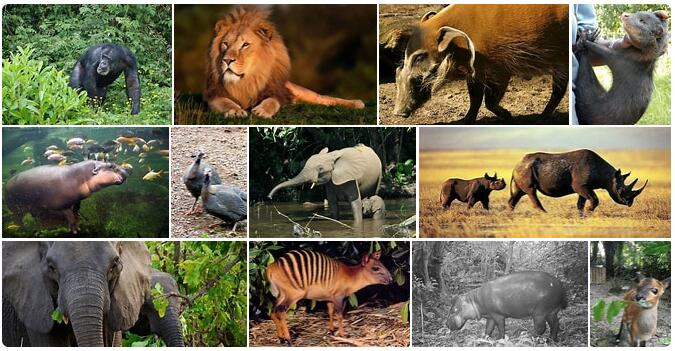 Liberia Wildlife