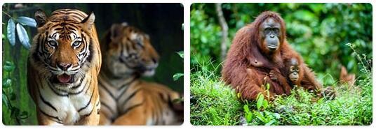 Malaysia Wildlife
