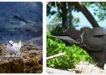 Marshall Islands Wildlife