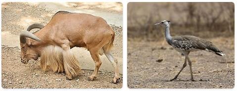 Mauritania Wildlife