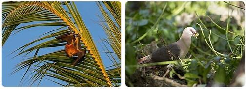 Mauritius Wildlife